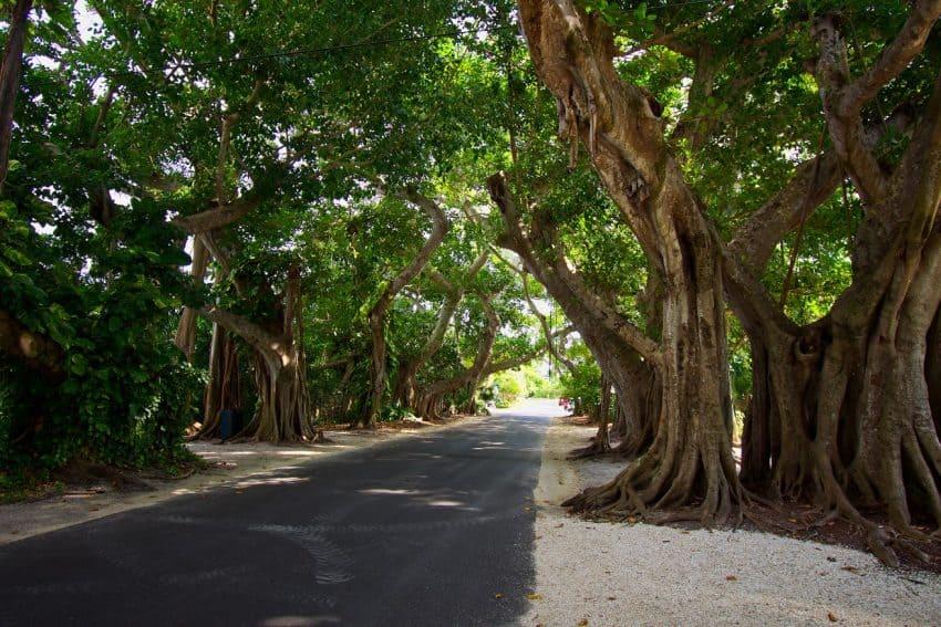 Banyan Street, Boca Grande, Gulf Coast Florida.