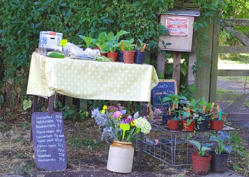 Farm stand with honor box.