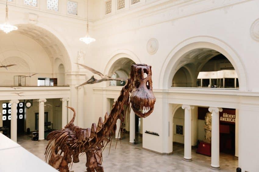 The 122-foot-long titanosaur.