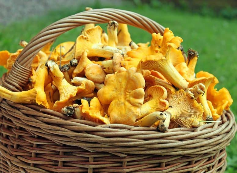 Mushrooms foraged in the Swedish forest. Make sure to never eat them unless an expert says their safe.