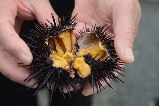 Sea urchin, an Iwate delicacy.