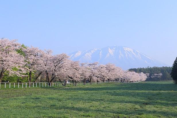 Japan's North After the Tsunami 12