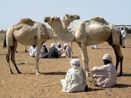 Sudan: A Land Worth the Wait 3