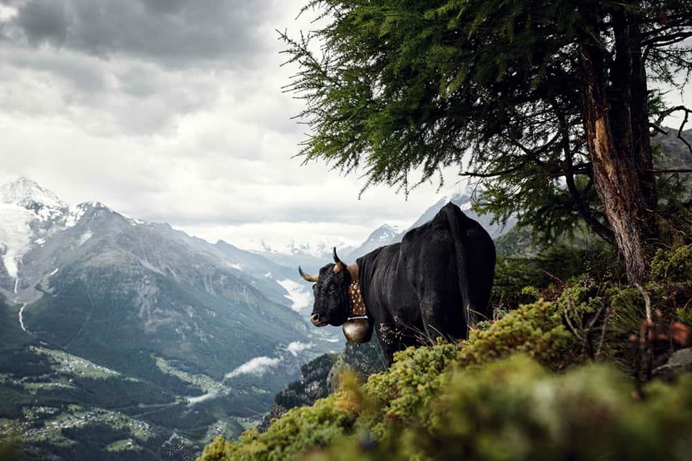 Eringer, Valais Switzerland © Werner Lampert GmbH, Photo Ramona Waldner