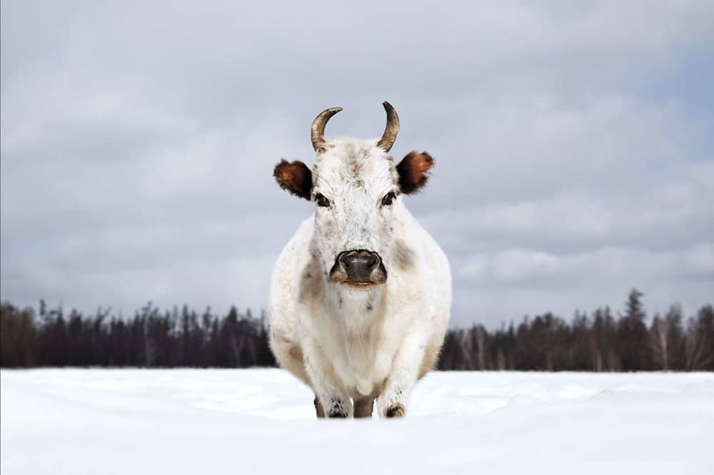 Sakha Ynaga Yakutia, Russia © Werner Lampert GmbH, Photo Ramona Waldner