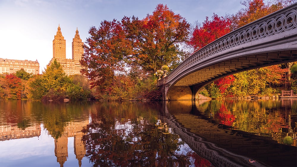 An early-morning walk in Central Park. Capturing Central Park in the fall is a lifelong dream for me as a photographer.