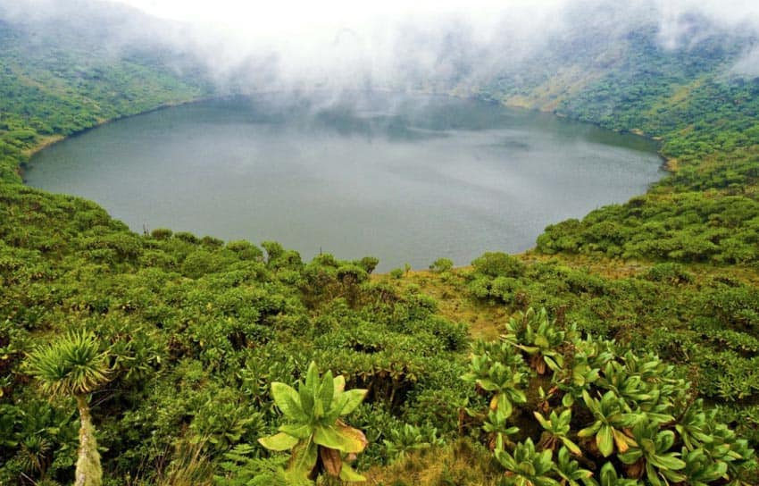 Rwanda is filled with biodiversity from rainforests to volcanoes.