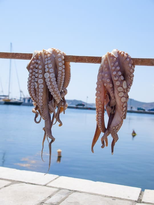 Octopus from the Mediterranean Sea in Naxos, Greece.