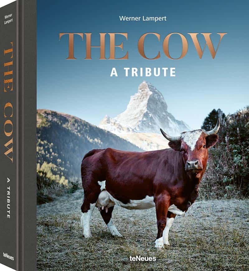 The Cow by Werner Lambert