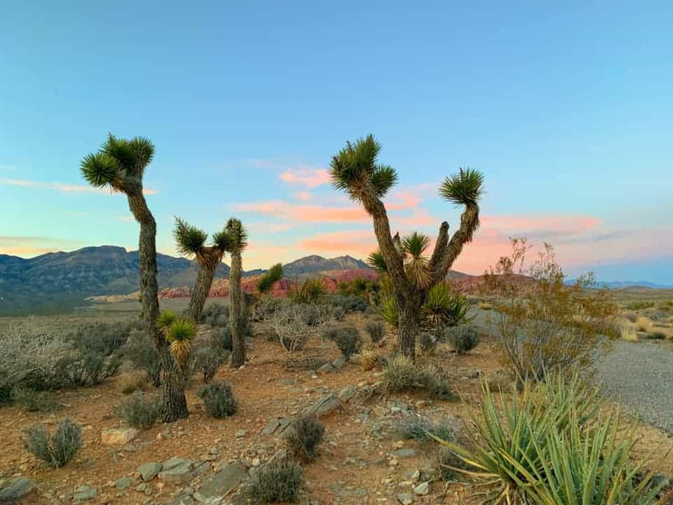 Red Rock Canyon is the perfect place to watch the sunset outside of Las Vegas.