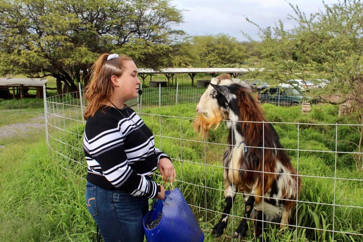 Surfing Goat Farm Tour, Maui.