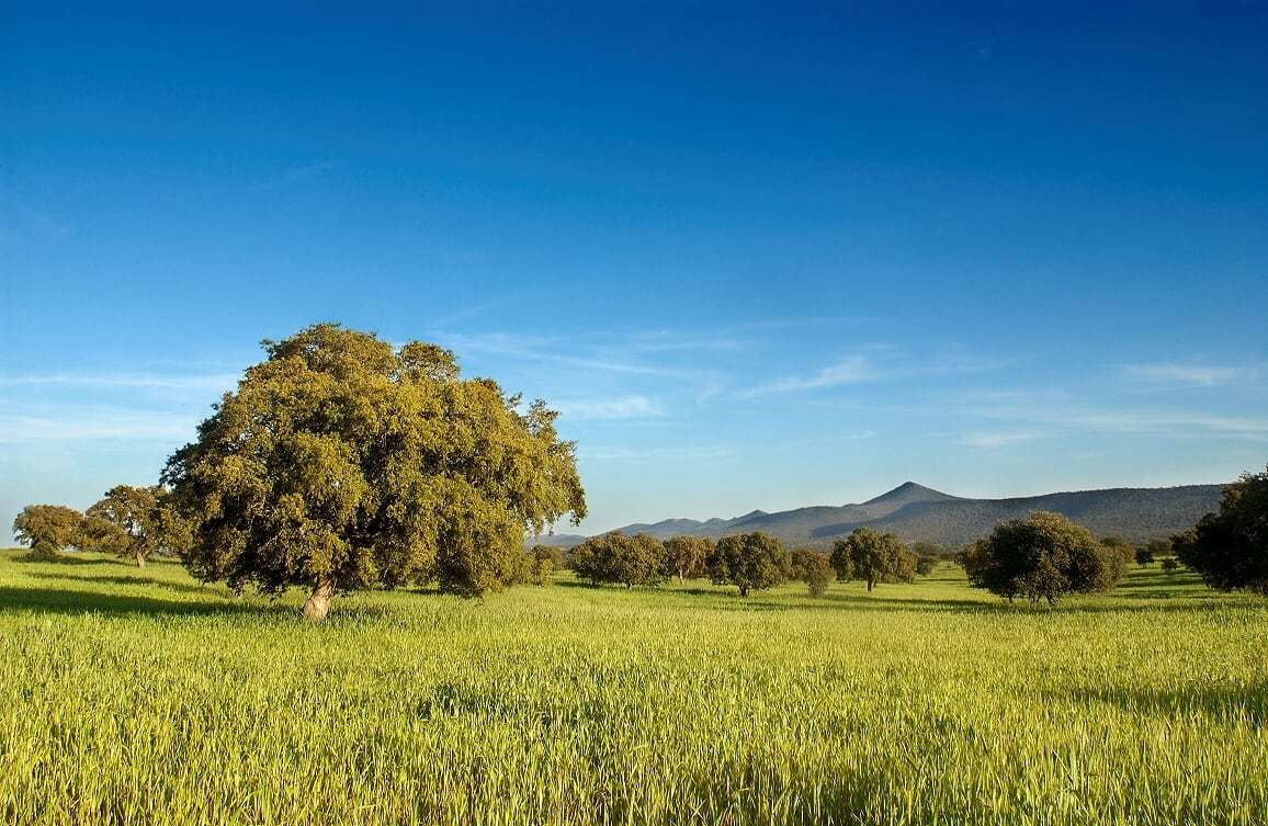 Extremadura's lush rolling hills are the perfect place to escape to. Extremadura Tourism photo, Spain.