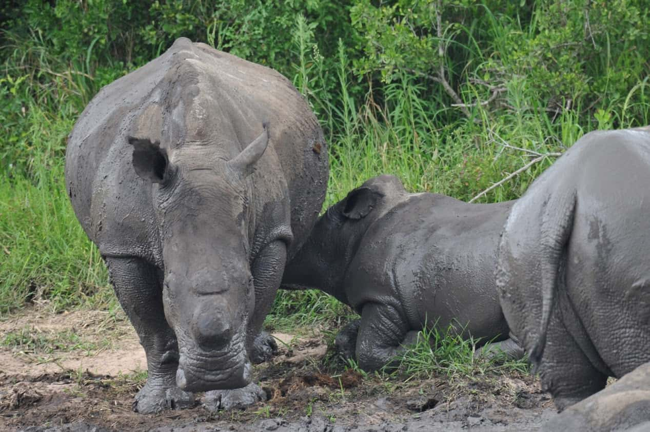 South Africa and Botswana Game Parks 20