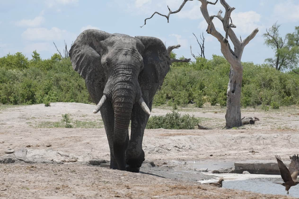 South Africa and Botswana Game Parks 18