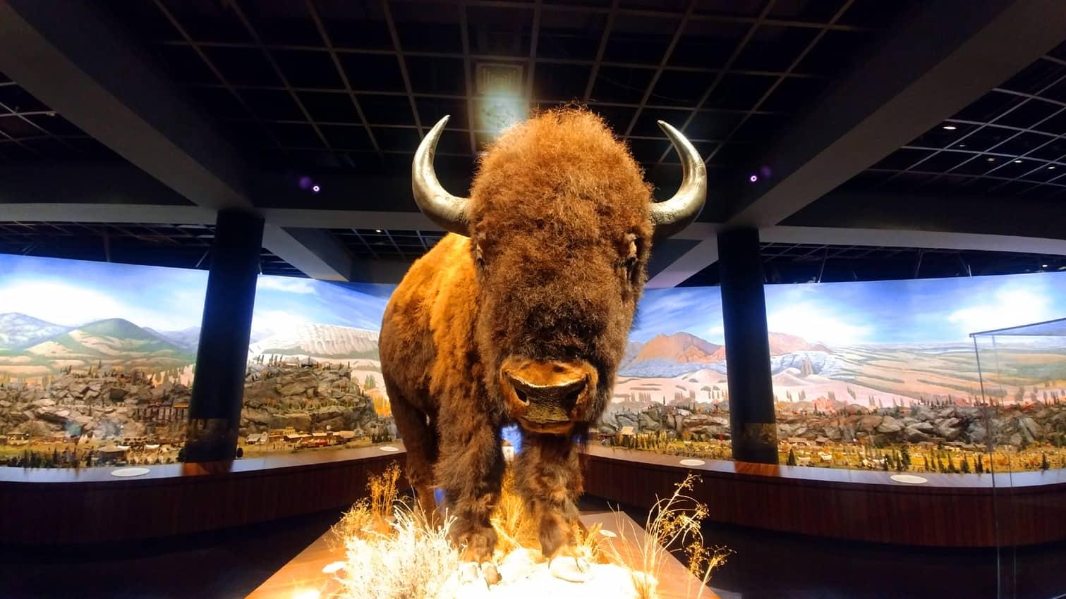 Natural History Gallery, Blackhawk Museum, Danville CA