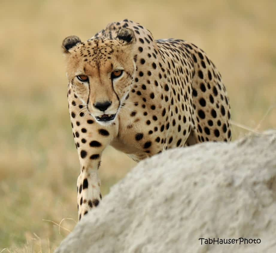 South Africa and Botswana Game Parks 17