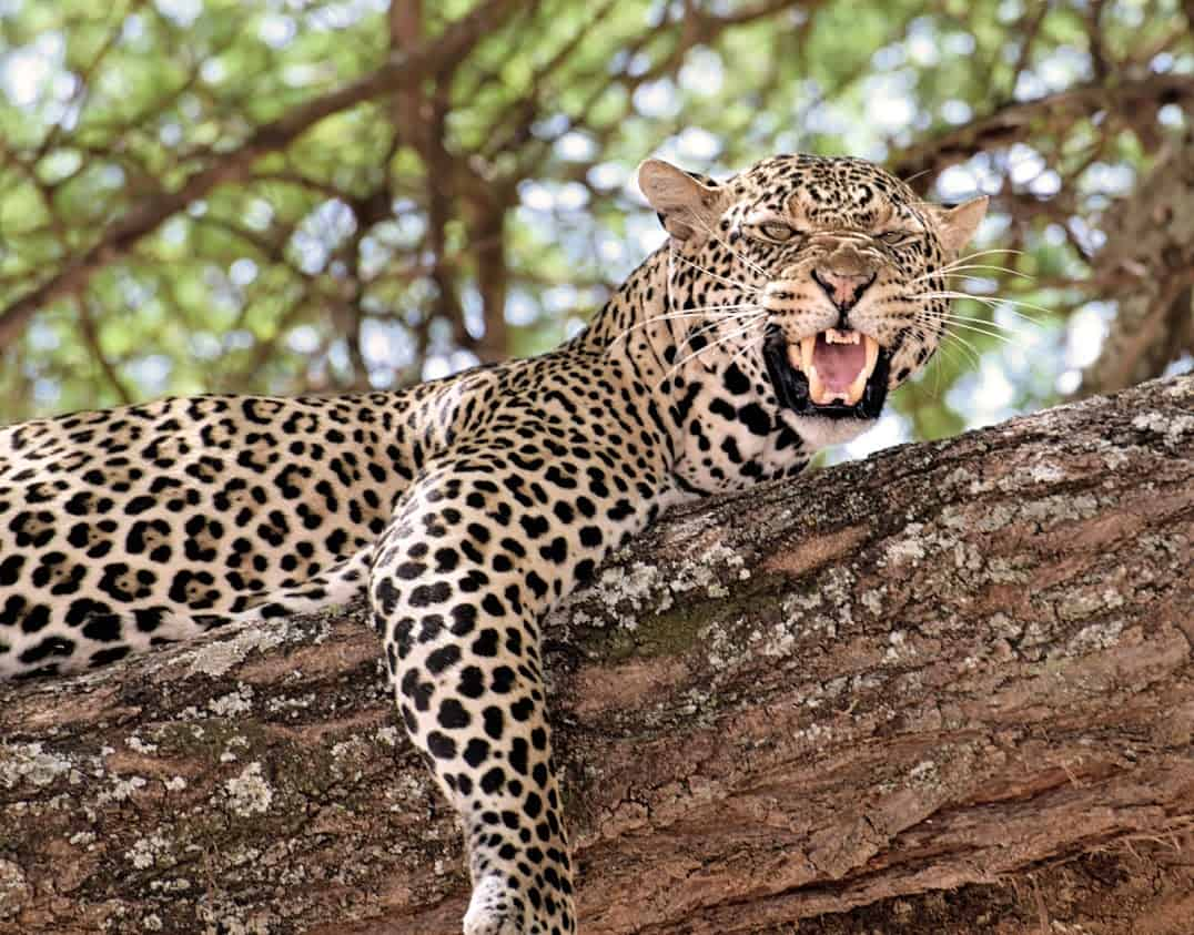 South Africa and Botswana Game Parks 11