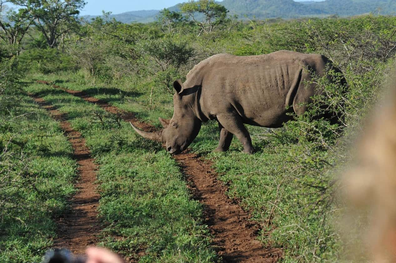 South Africa and Botswana Game Parks 7