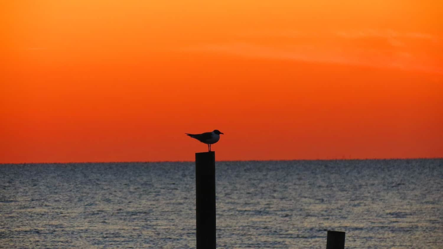 A seagull and the sunset.