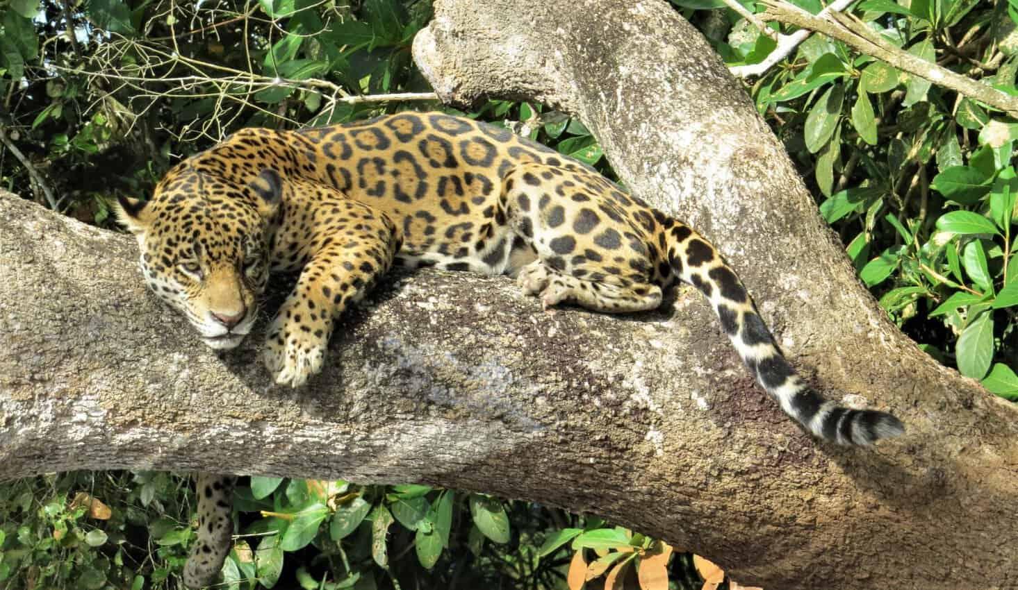 Pantanal, Brazil: Magnificent Creatures Abound! 19