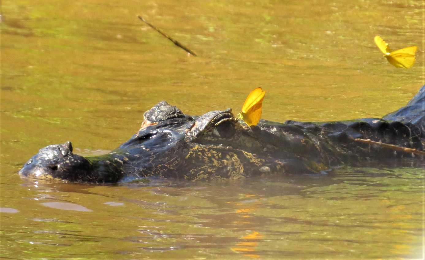 Pantanal, Brazil: Magnificent Creatures Abound! 21