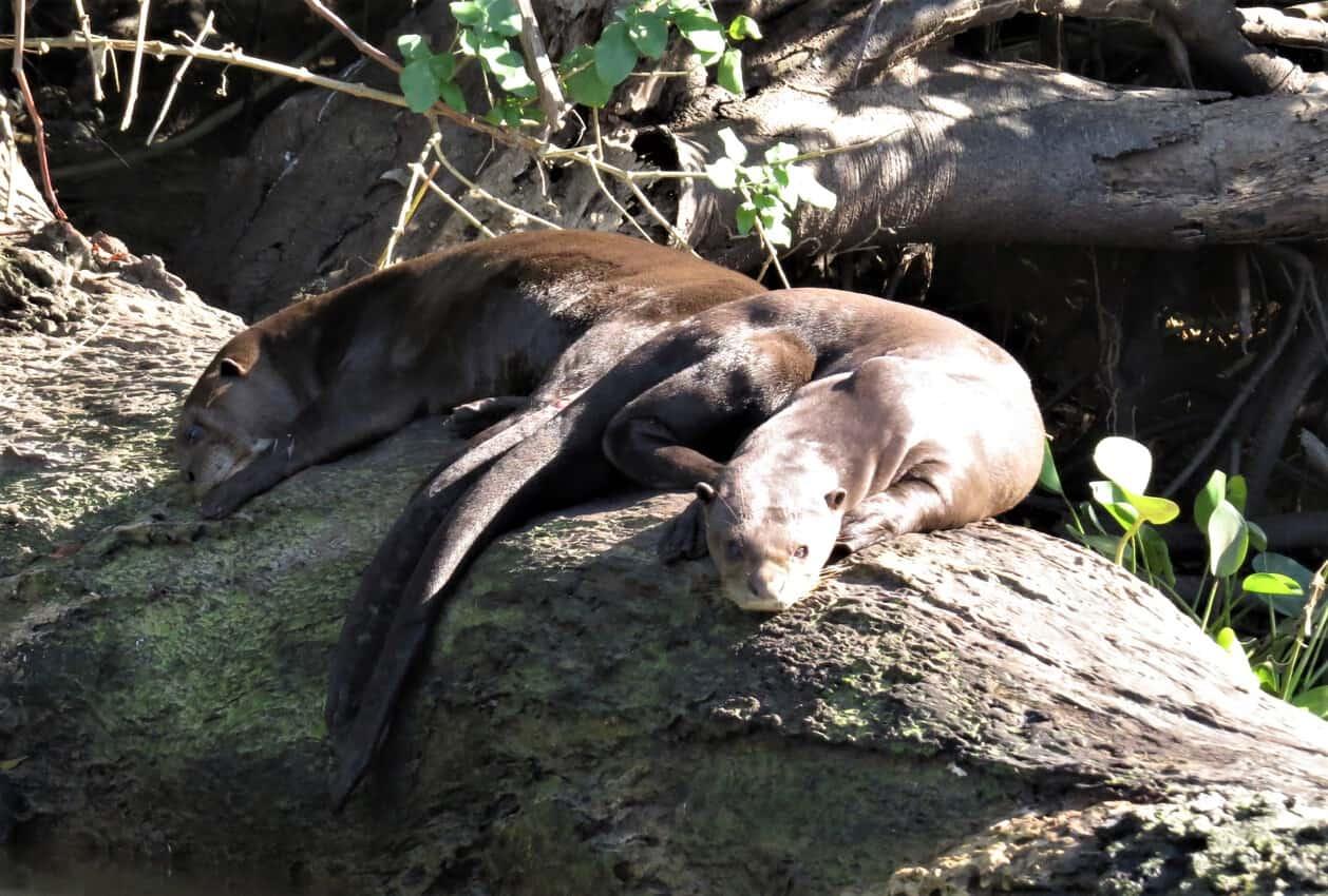 Pantanal, Brazil: Magnificent Creatures Abound! 2