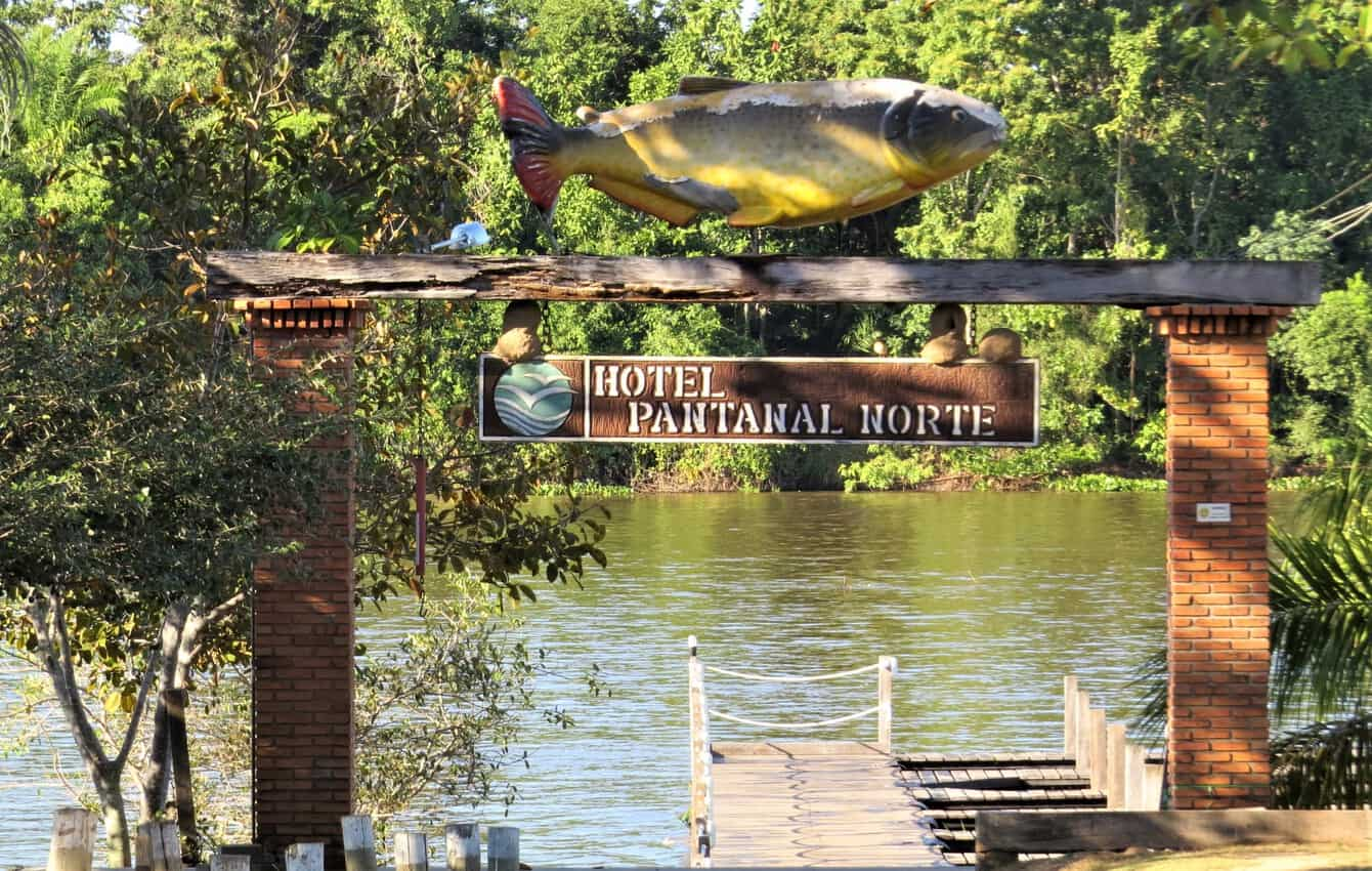 Pantanal, Brazil: Magnificent Creatures Abound! 3