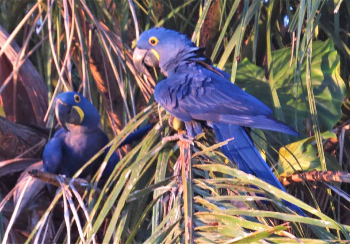 Pantanal, Brazil: Magnificent Creatures Abound! 4