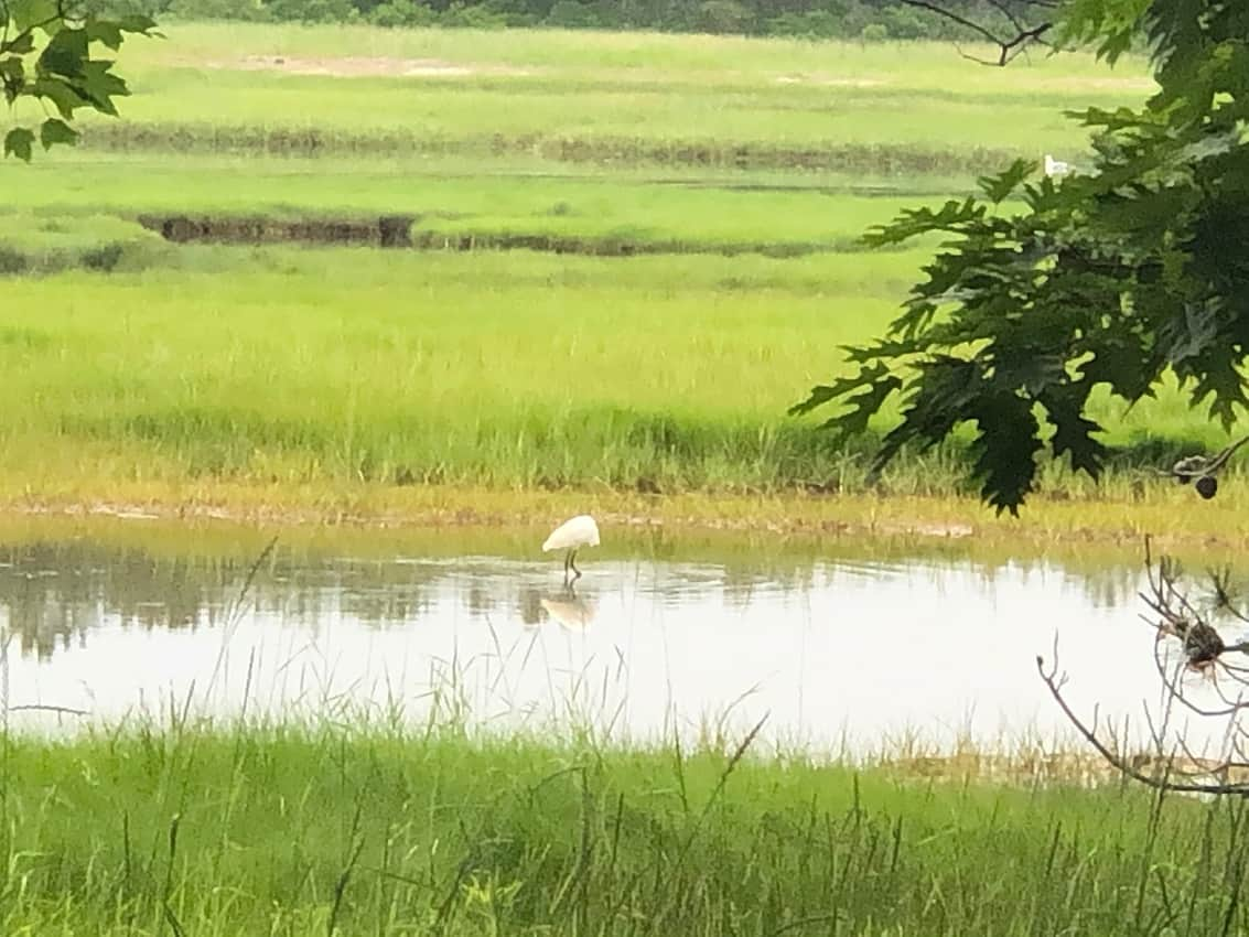 The pretty scene of the marsh right behind the Sandy Pines Camping location in Kennebunkport, Maine.
