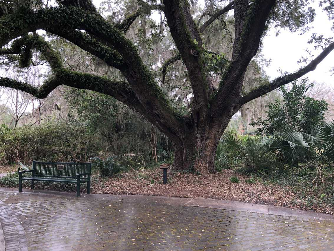The huge 9100 acre gardens site is filled with live oak with their Spanish Moss.