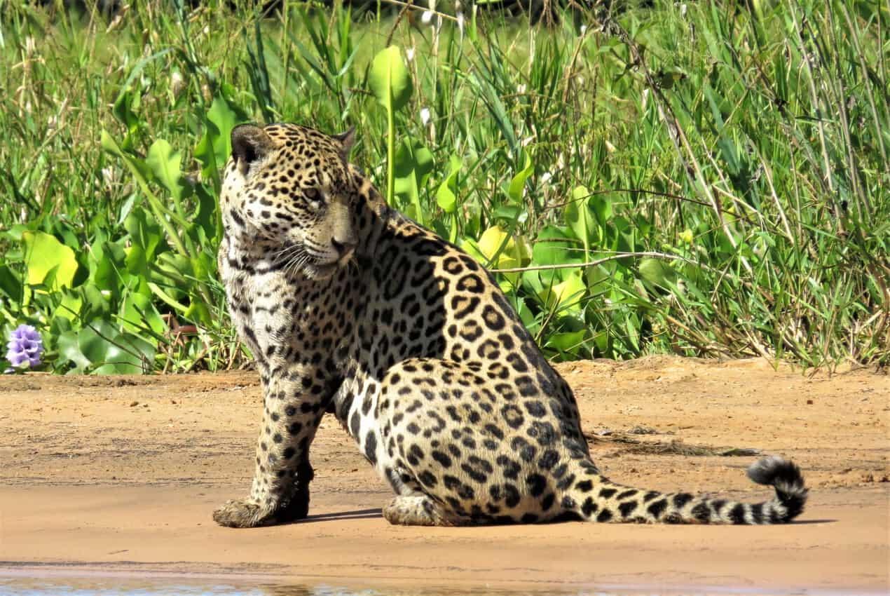 Pantanal, Brazil: Magnificent Creatures Abound! 5