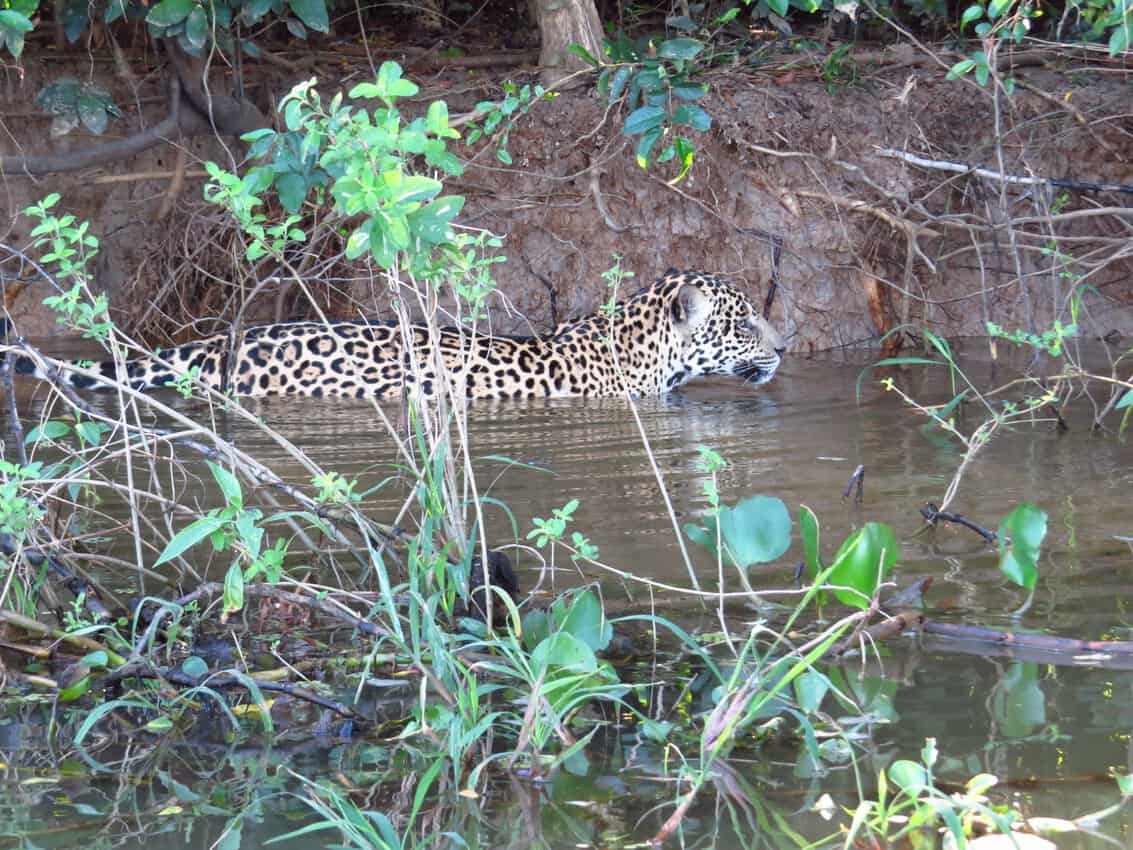 Pantanal, Brazil: Magnificent Creatures Abound! 6