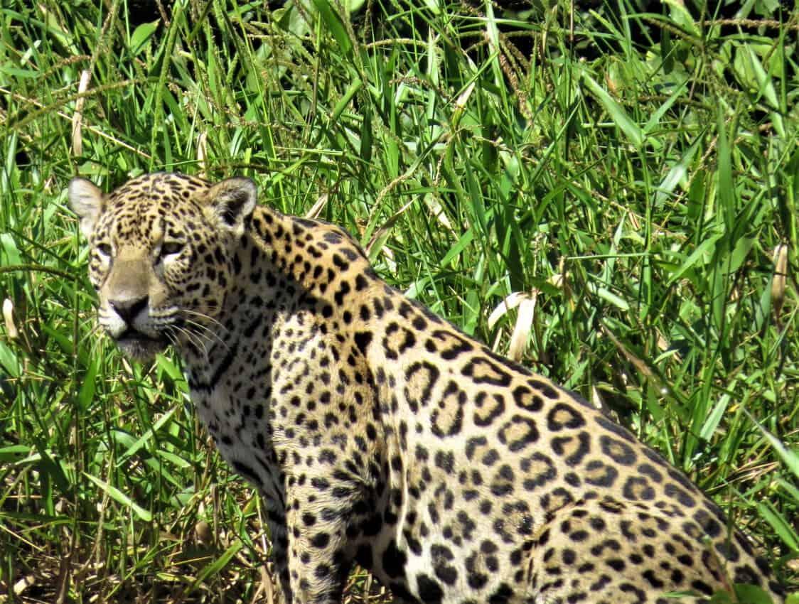 Pantanal, Brazil: Magnificent Creatures Abound! 9