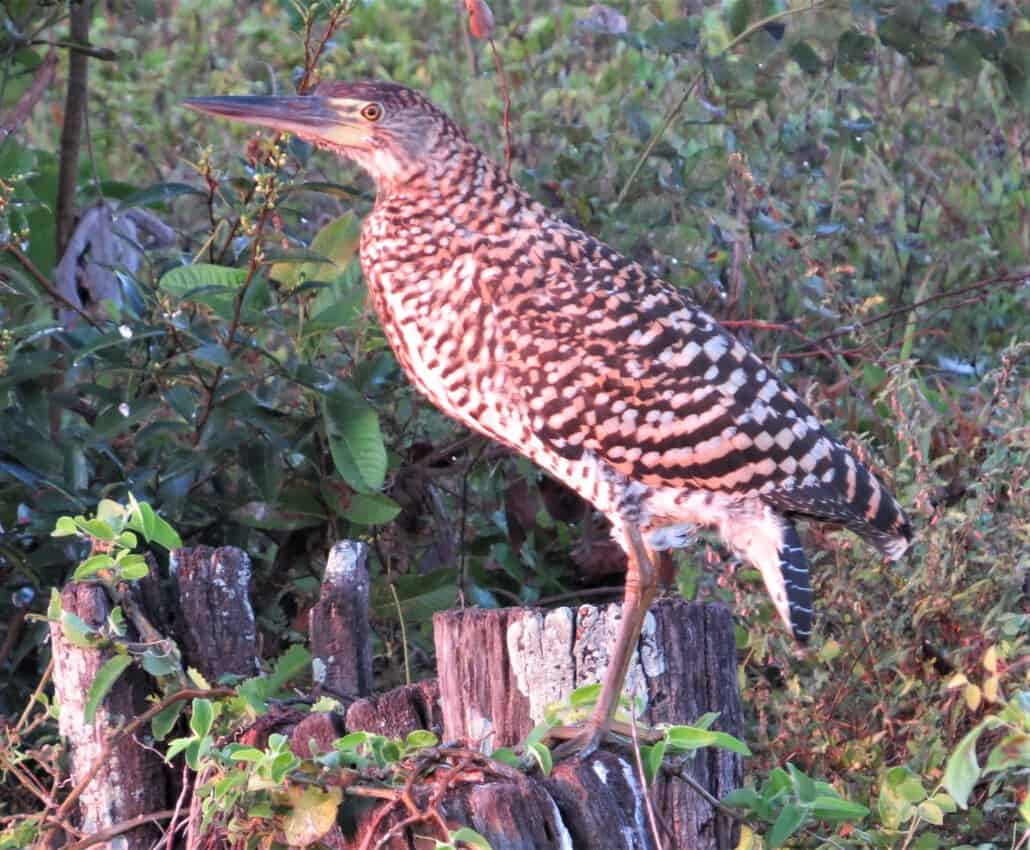 Pantanal, Brazil: Magnificent Creatures Abound! 12