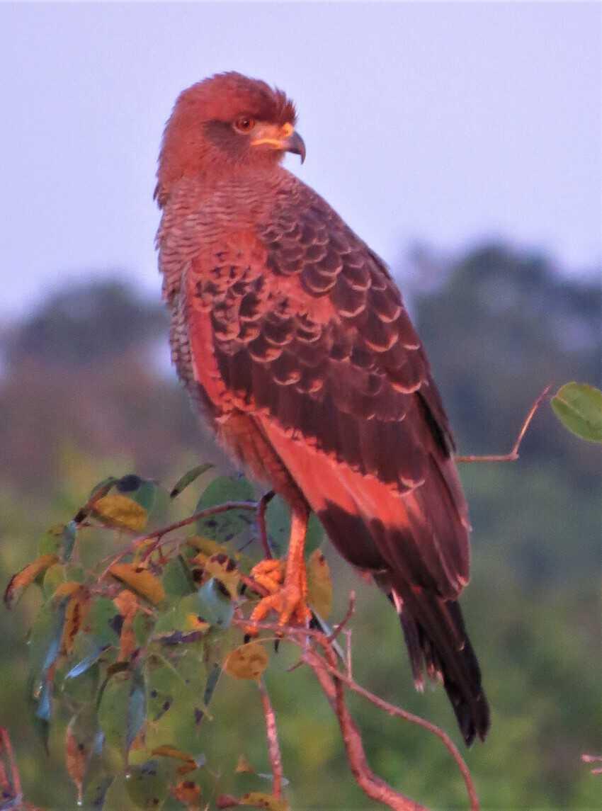 Pantanal, Brazil: Magnificent Creatures Abound! 13