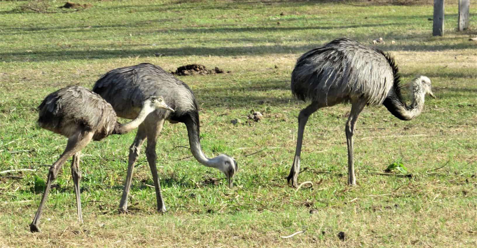 Pantanal, Brazil: Magnificent Creatures Abound! 14