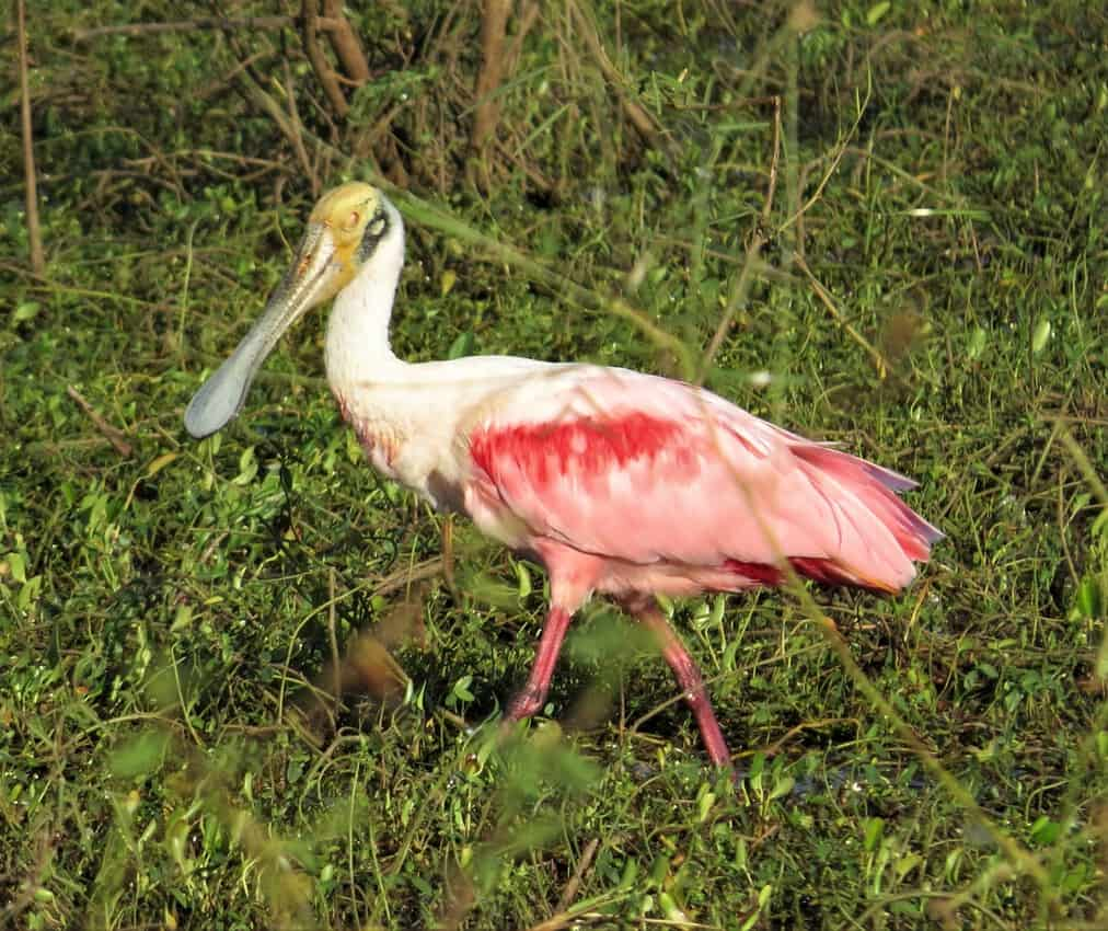 Pantanal, Brazil: Magnificent Creatures Abound! 16