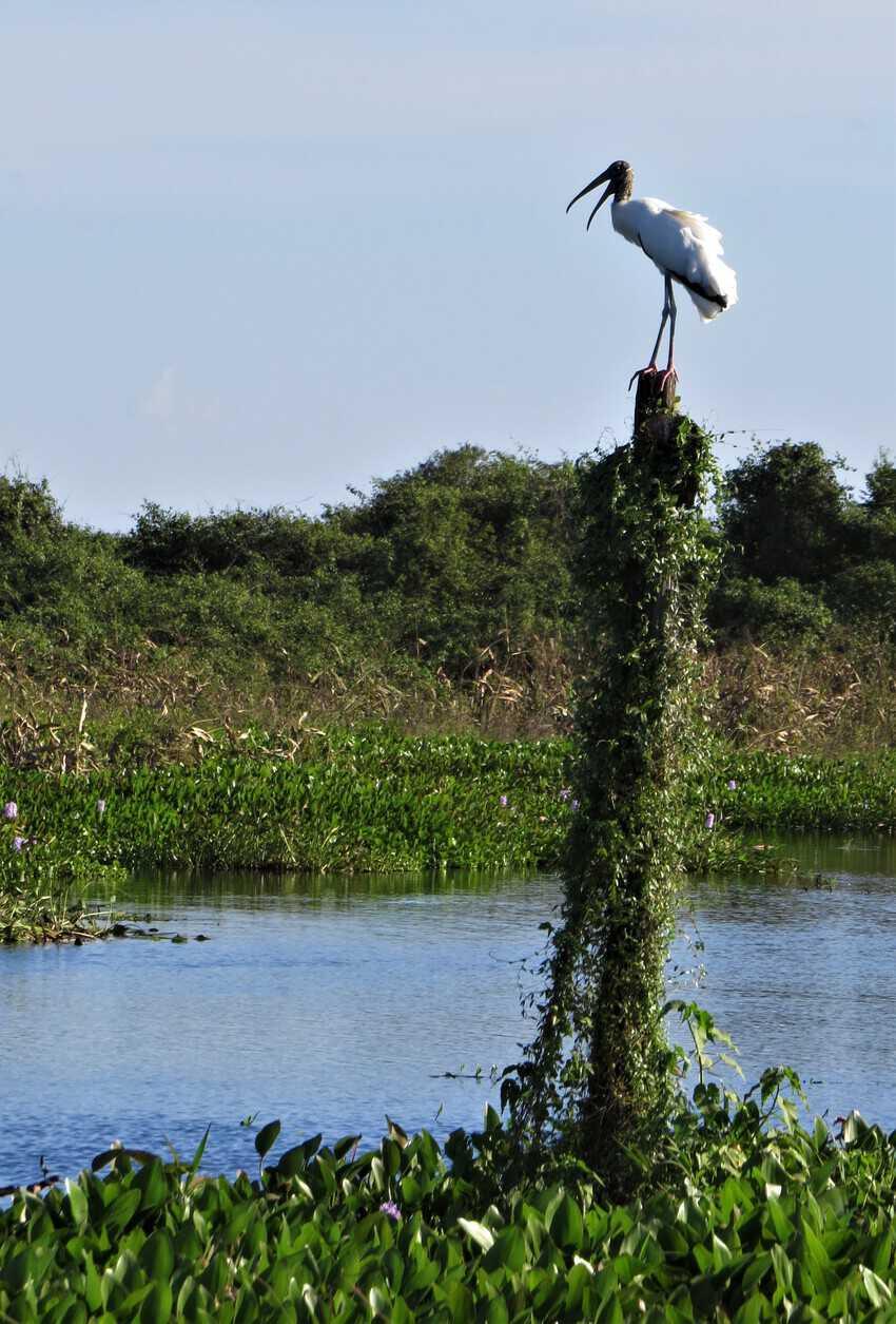 Pantanal, Brazil: Magnificent Creatures Abound! 18