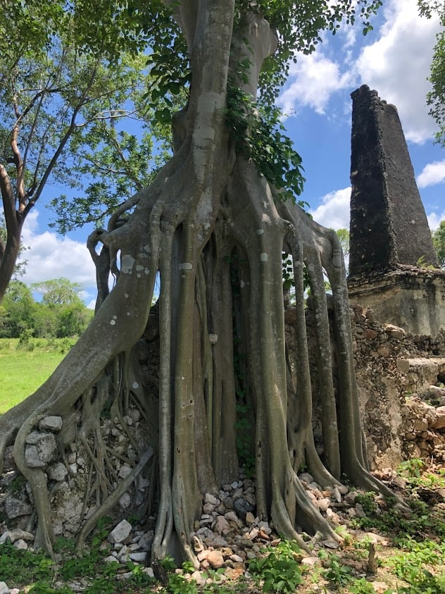 Ancient tree and remains from a temple.
