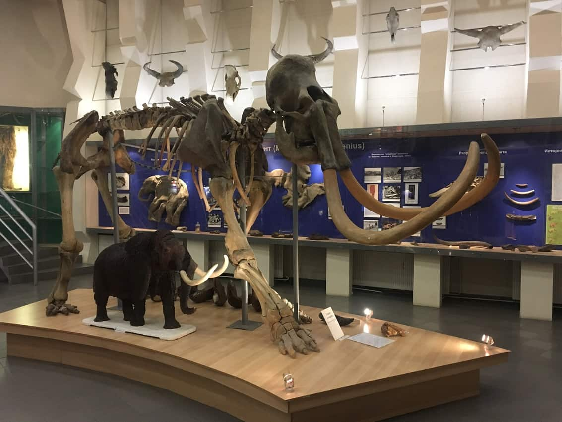 A model of a mammoth next to a regular-sized elephant in Yakutia, Siberia Russia.