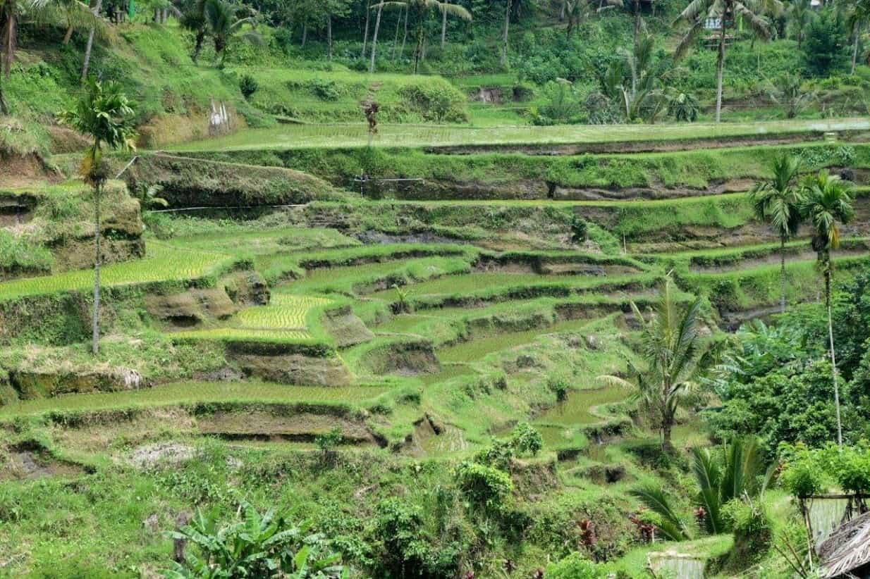 Bali Four Ways 1