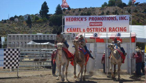 camels gate good
