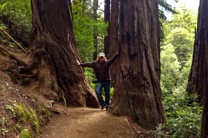 No need for a road trip to see those California Redwoods. Oakland offers its own nearby trails.