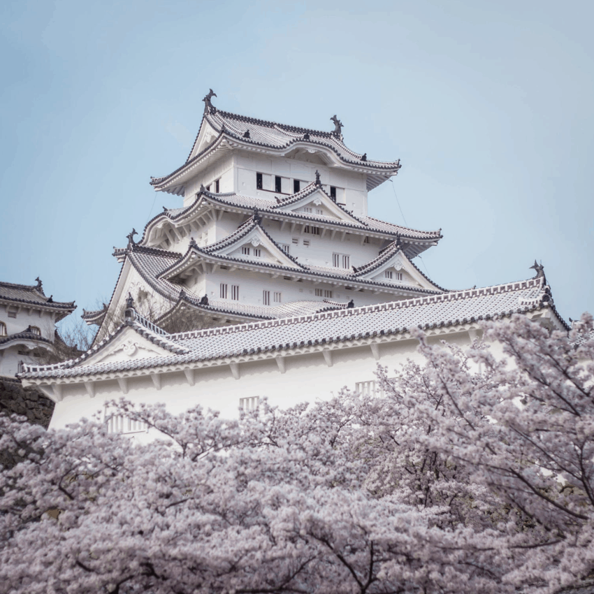 Himeiji Castle among cherry blossoms
