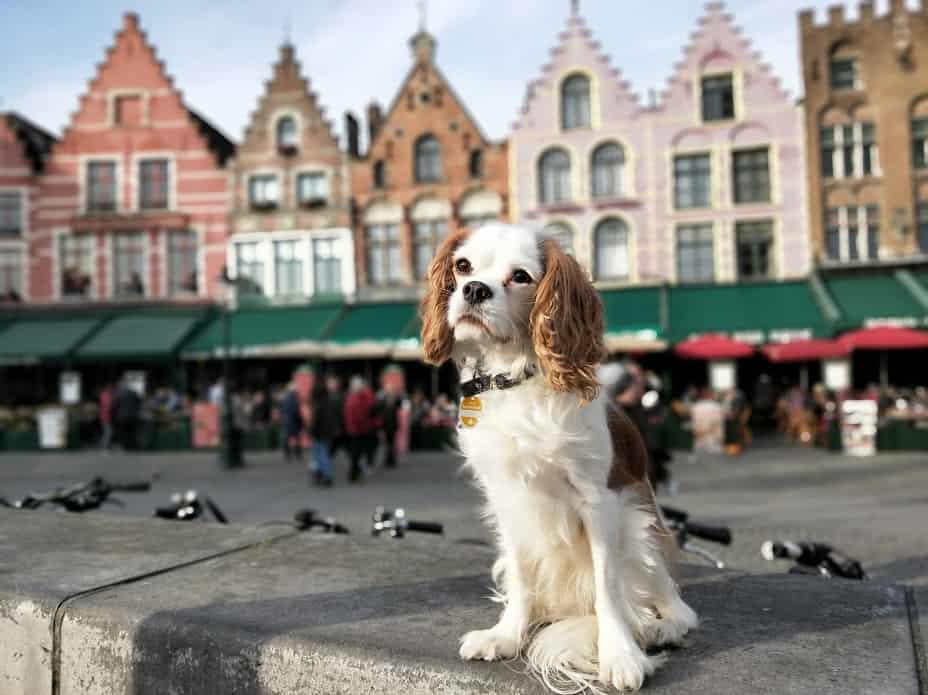 Archie in Grote Markt