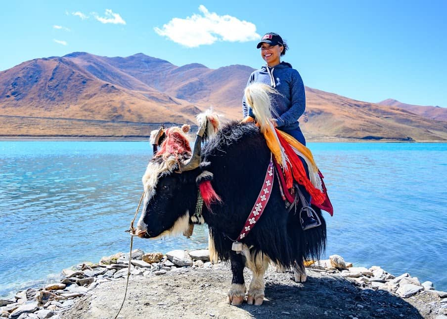 For one dollar, travelers on the Friendship Highway can pose with yaks tied up on the shores of sacred Yamdrok Lake.