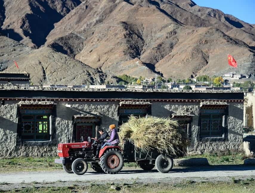 October is harvest time for barley, one of the staples in the Tibet diet.