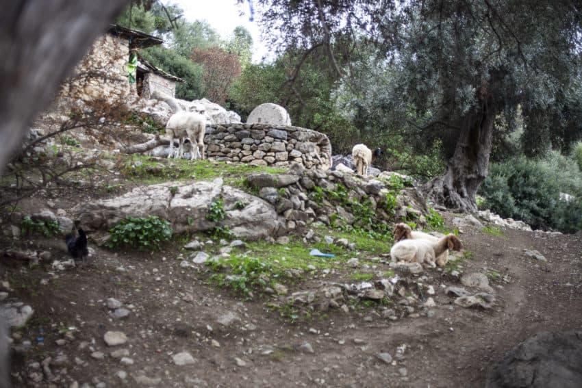 Chefchaouen, Morocco: The Hashish Farmer's Home 4