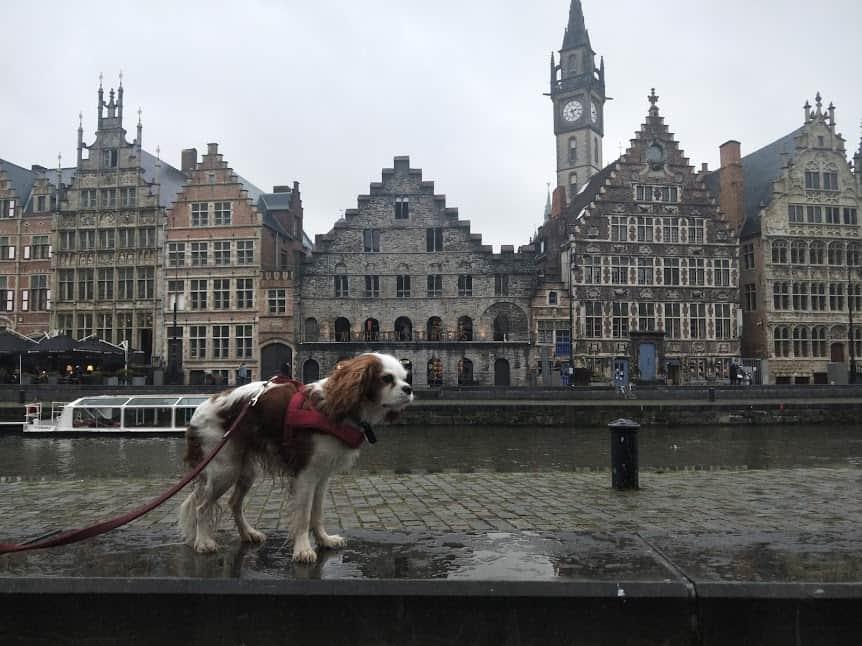 Archie in Ghent, Belgium