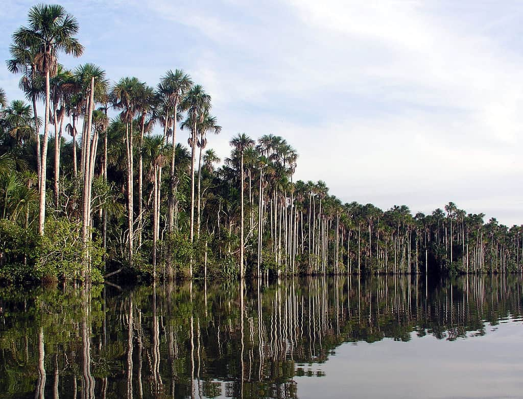 Lake in Puerto Maldonado, Peru.
